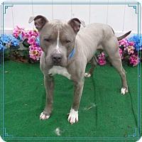 Adopt A Pet :: BLU - Marietta, GA
