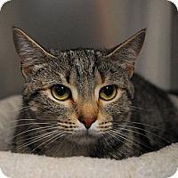 Adopt A Pet :: Xena - Lunenburg, MA