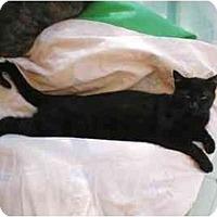 Adopt A Pet :: HIAWATHA - El Cajon, CA