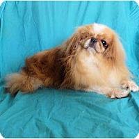 Adopt A Pet :: Lancelot - Mooy, AL