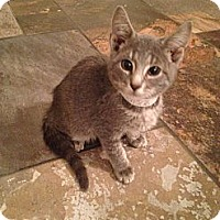 Adopt A Pet :: Polie - East Hanover, NJ