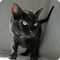 Adopt A Pet :: Dawn - Milwaukee, WI