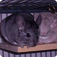 Adopt A Pet :: Roo m & Bella f - Avondale, LA