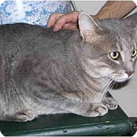 Adopt A Pet :: Smokey - Warminster, PA