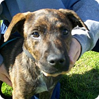 Adopt A Pet :: JoJo - Lancaster, OH