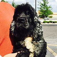 Adopt A Pet :: Marble - St. Petersburg, FL
