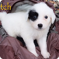 Adopt A Pet :: Patch - Austin, TX