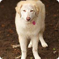Adopt A Pet :: Claire - Berkeley Heights, NJ