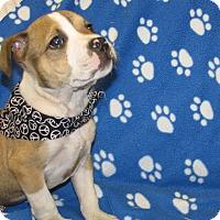 Adopt A Pet :: Cabot - Groton, MA