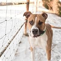 Adopt A Pet :: Toby - Valley Falls, KS