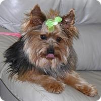 Adopt A Pet :: Nathan - REDDING, CA