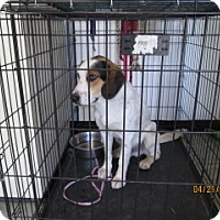 Adopt A Pet :: Bobby - Weatherford, TX