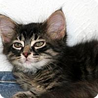 Adopt A Pet :: Lowell-13328 - Richardson, TX
