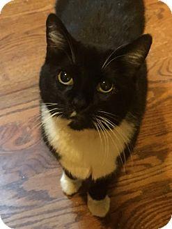 Domestic Mediumhair Cat for adoption in Philadelphia, Pennsylvania - Fran