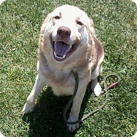 Adopt A Pet :: Jake - Harvard, IL