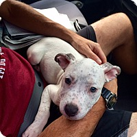 Adopt A Pet :: Turbo - Reisterstown, MD