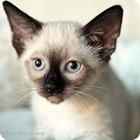 Adopt A Pet :: Sparkler - Rocklin, CA
