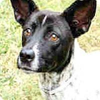 Adopt A Pet :: Sammy - Boulder, CO