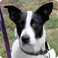 Adopt A Pet :: Jasper - Ann Arbor, MI