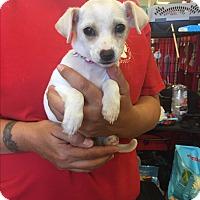 Adopt A Pet :: Elsa - Brea, CA