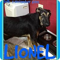 Adopt A Pet :: LIONEL - Allentown, PA
