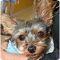 Adopt A Pet :: ZuZu - Palm City, FL