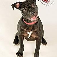 Adopt A Pet :: Jada - Gillsville, GA
