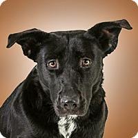Adopt A Pet :: Jade - Prescott, AZ