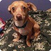 Adopt A Pet :: FUFI - Hampton, VA