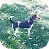 Adopt A Pet :: Sooie - Novi, MI