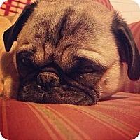 Adopt A Pet :: Frankie - Hazard, KY