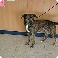 Adopt A Pet :: Duke - Ludington, MI