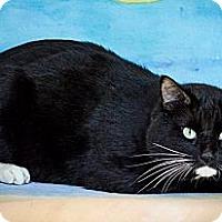 Adopt A Pet :: Rodger - Sacramento, CA