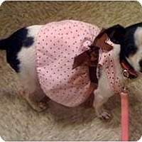 Adopt A Pet :: Jaynee - Fowler, CA