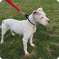 Adopt A Pet :: Joey - Scottsdale, AZ