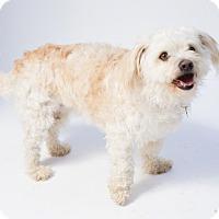 Adopt A Pet :: Thunder - Santa Barbara, CA