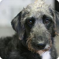 Adopt A Pet :: Trudy - Canoga Park, CA