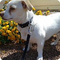 Adopt A Pet :: Bingo formerly Ford - Las Vegas, NV
