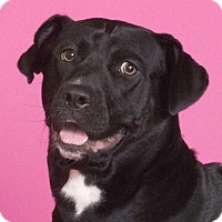 Adopt A Pet :: Mini - Chicago, IL