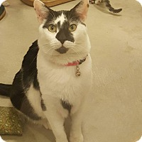 Adopt A Pet :: Hojo - Chicago, IL