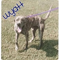 Adopt A Pet :: Wyatt* - Wilmington, DE