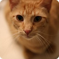 Adopt A Pet :: Mork - Olive Branch, MS