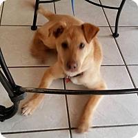 Adopt A Pet :: Sampson - Genoa City, WI