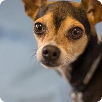 Adopt A Pet :: Leggo - Bradenton, FL