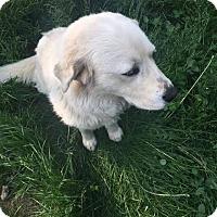 Adopt A Pet :: Gemma - Warsaw, IN