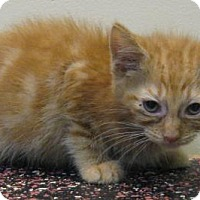 Adopt A Pet :: Howard - Gary, IN