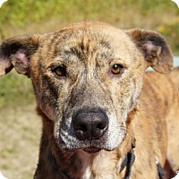 Adopt A Pet :: Sam - Bellingham, WA