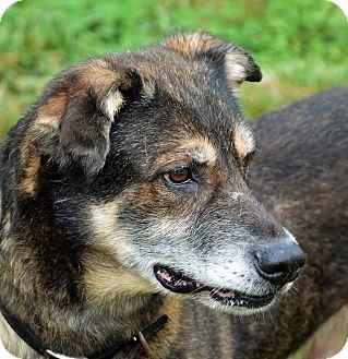 Shepherd (Unknown Type)/German Shepherd Dog Mix Dog for adoption in Lincolnton, North Carolina - LeStat