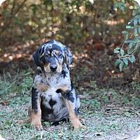 Adopt A Pet :: padriac - Groton, MA