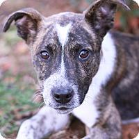 Adopt A Pet :: Elliot - Monroe, NC